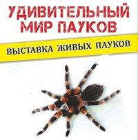 Афиша Ижевска — Выставка «Удивительный мир пауков»