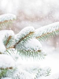 Афиша Ижевска — Медиапрезентация «Нежная снежная сказка зимы»