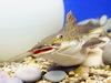 Афиша Ижевска — Выставка «Экзотические рыбы»