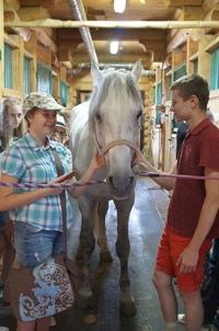 Афиша Ижевска — Летняя ветеринарная школа