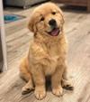 Базовый курс послушания для собак