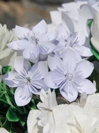 Афиша Ижевска — Акция «Белый цветок — исцели милосердием»
