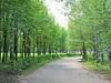 Ижевск — «Козий парк» (Берёзовая роща)