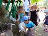 В зоопарке теперь можно брать зверей на руки