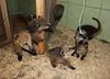 5 малышей носухи родились в ижевском зоопарке
