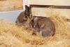 Пара кенгуру поселилась в Ижевском зоопарке