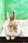 Погладить кролика, покормить попугая. «Контактный зоопарк» в Ижевске