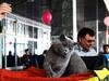 Афиша Ижевска — Солнечные котики