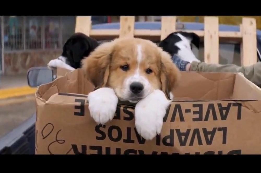 Куда пойти в выходные: «Собачья жизнь», Баста, Garage sale «Толкучка 2.0» и ещё 6 идей