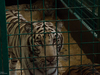 Афиша Ижевска — Шоу «Королевский цирк» Гии Эрадзе | Как это было?