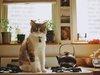Афиша Ижевска — Куда пойти на неделе: «Уотергейт. Крушение Белого дома», мюзикл «Алые паруса», выставка «Шаги в жизнь» и ещё 6 идей